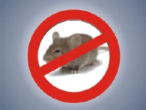 bahan-aktif-racun-tikus-atau-temik